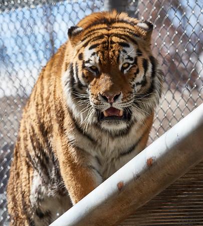 Denver Zoo 3_22_18