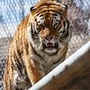 Denver Zoo 010