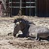 Denver Zoo 003