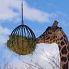 Denver Zoo 007