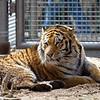 Denver Zoo 009