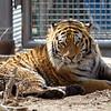 Denver Zoo 008