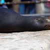 Denver Zoo 015