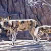 Denver Zoo 001