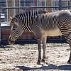 Denver Zoo 002