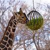 Denver Zoo 016