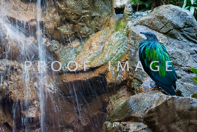 Bird and Waterfall