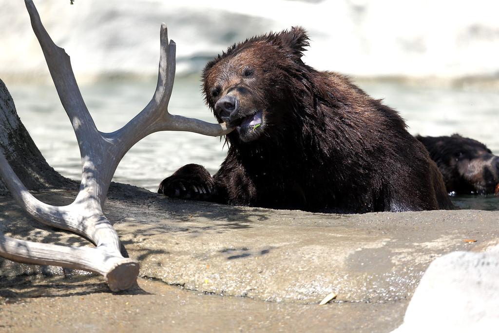 IMAGE: http://smerryfield.smugmug.com/Zoos/Detroit-Zoo-May-2012/i-VJVrNvq/0/XL/451A0147-XL.jpg