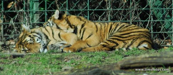 Dublin Zoo 07 Mar 2010