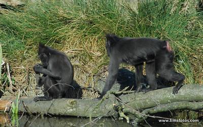 Dublin Zoo 110310