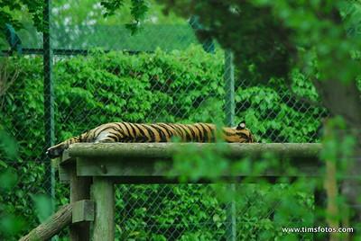 Dublin Zoo 20 May 2010