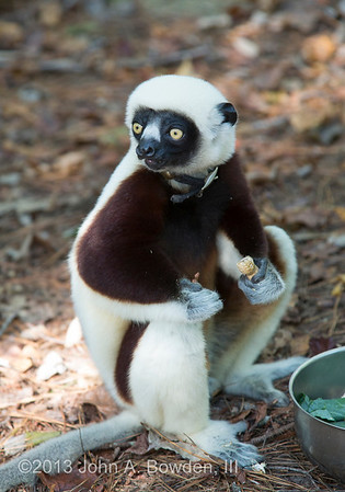 Duke Lemur Center 10-5-13