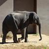 Kandula outside the new elephant community center