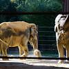 Female Asian Indians, National Zoo, Washington DC