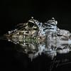 Close-up van een breedsnuitkaaiman in het water / Broad-snouted Caiman in the water up close (Burgers Zoo, Arnhem)