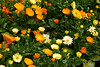 flowers0001