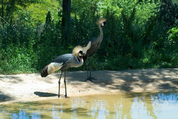 """<font size=""""3"""">The bird in the foreground struts for the crowd.</font><br><br>"""
