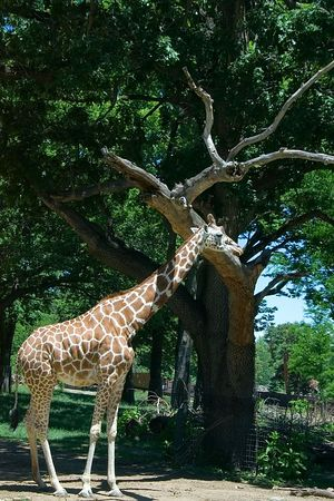 """<font size=""""3"""">Compared to the tree, this fellow doesn't look quite so tall.</font>"""
