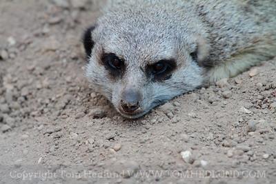 Henry Zila Zoo 06-29-2012