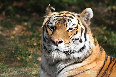 Madison Zoo 10-17-2011