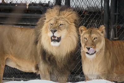 Madison Zoo 2-15-10