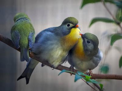 2013 Honolulu Zoo Birds