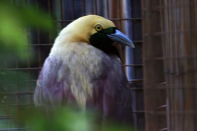 Bird of Paradise Honolulu Zoo