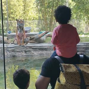 Jacksonville Zoo 11262016