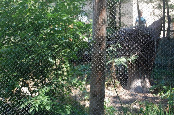 John Ball Zoo-August 2012