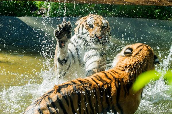 Water Fun 16 - Vesileikit 16