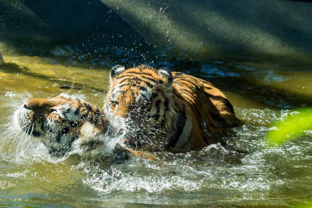 Water Fun 15 - Vesileikit 15