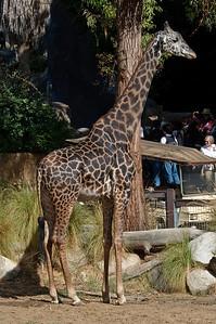 2008-11-02 LA Zoo Photo day-0653