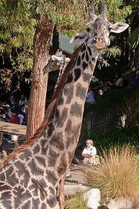 2008-11-02 LA Zoo Photo day-0663