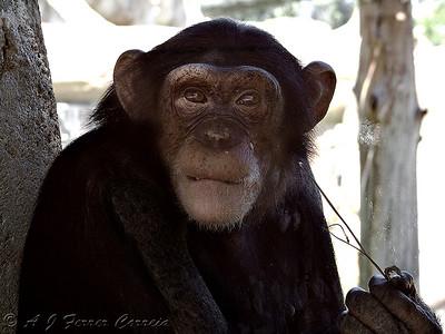 Lisbon Zoo - 2007