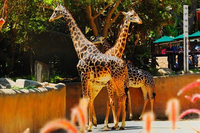 Los Angeles Zoo_18