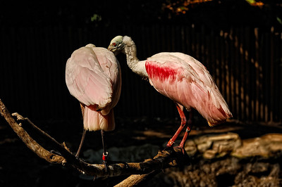 Los Angeles Zoo_6