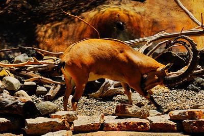 Los Angeles Zoo_20