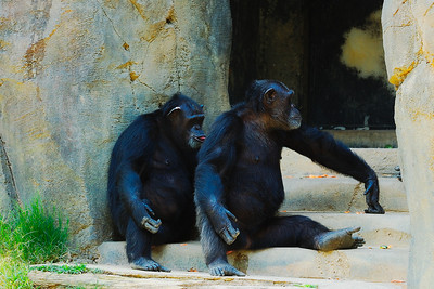 Los Angeles Zoo_26
