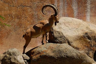 Los Angeles Zoo_22