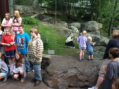 Visitors to the zoo not watched by breakfasting Tai Shan. Giant Panda, National Zoo.