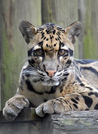 Lowry Park Zoo Animals Asia