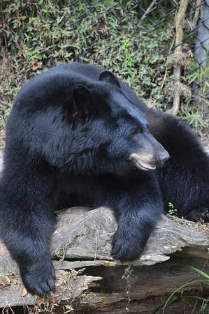 Lowry Park Zoo Animals Florida Boardwalk