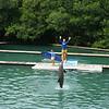 Flipper Show