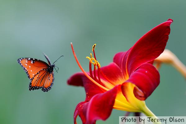 Minnesota Zoo Butterfly Garden