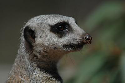 :: Monarto Zoo ::