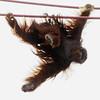 Swinging 45 feet overhead without a net, Kiko looks down on a photographer.