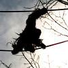 Orangutan Kiko takes the O Line from the Think Tank to the Great Ape House.