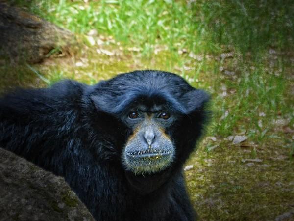 Montgomery Zoo, Alabama