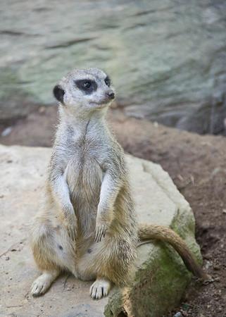 Nashville TN Zoo 2011