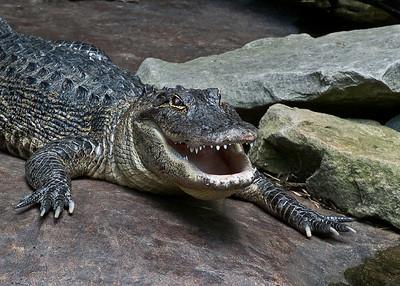 Nashville, TN Zoo 2012
